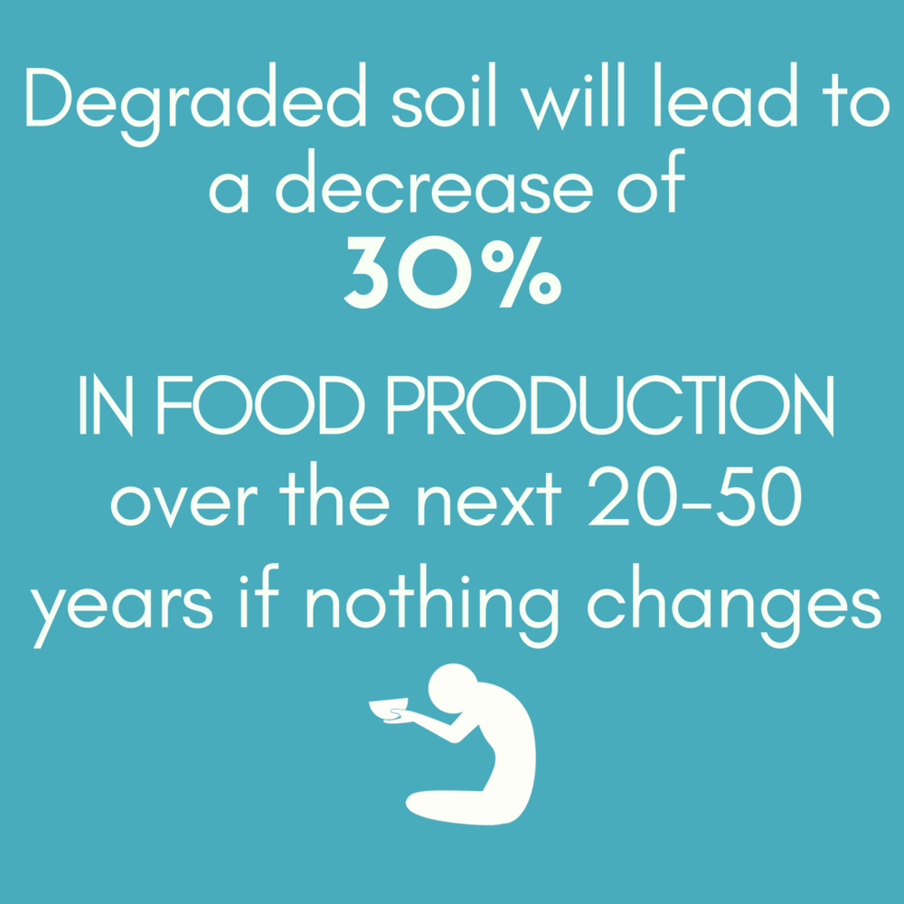 FASHION  & SOIL DEGRADATION