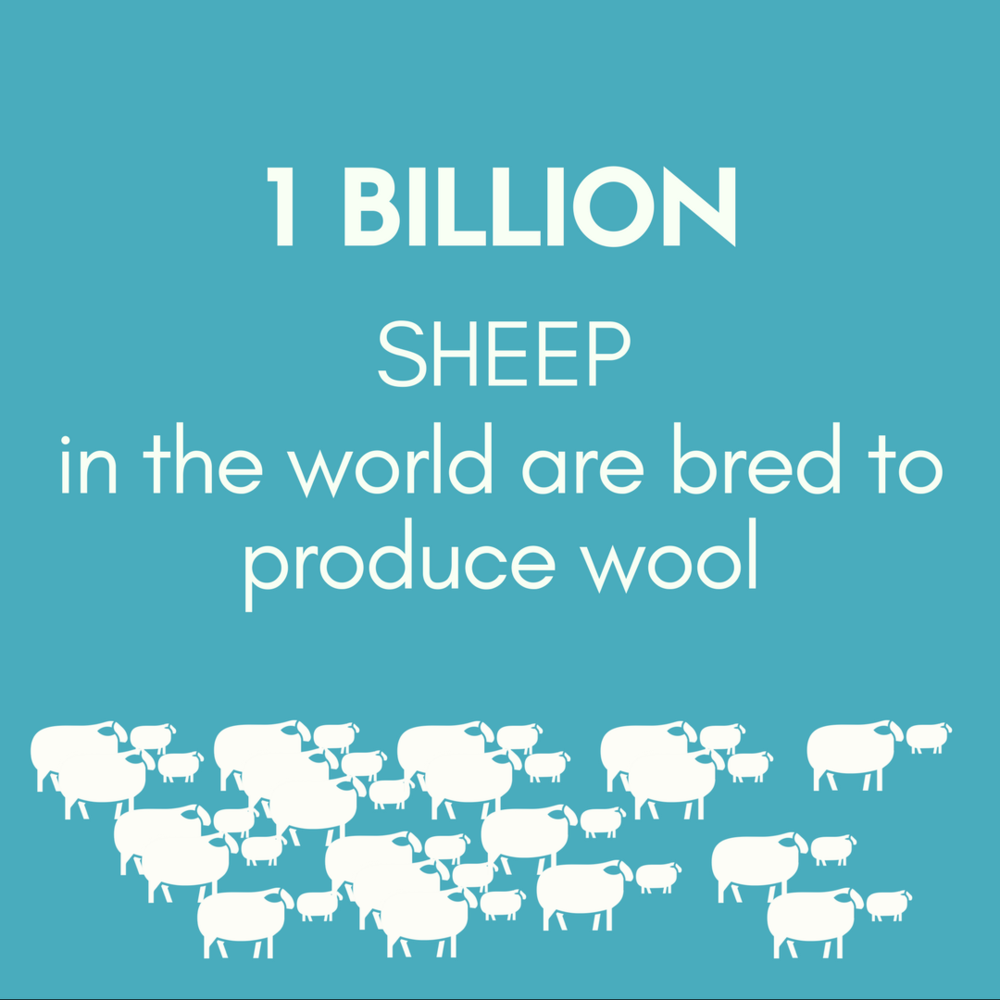 1 BILLION SHEEP in the world are bred to produce wool