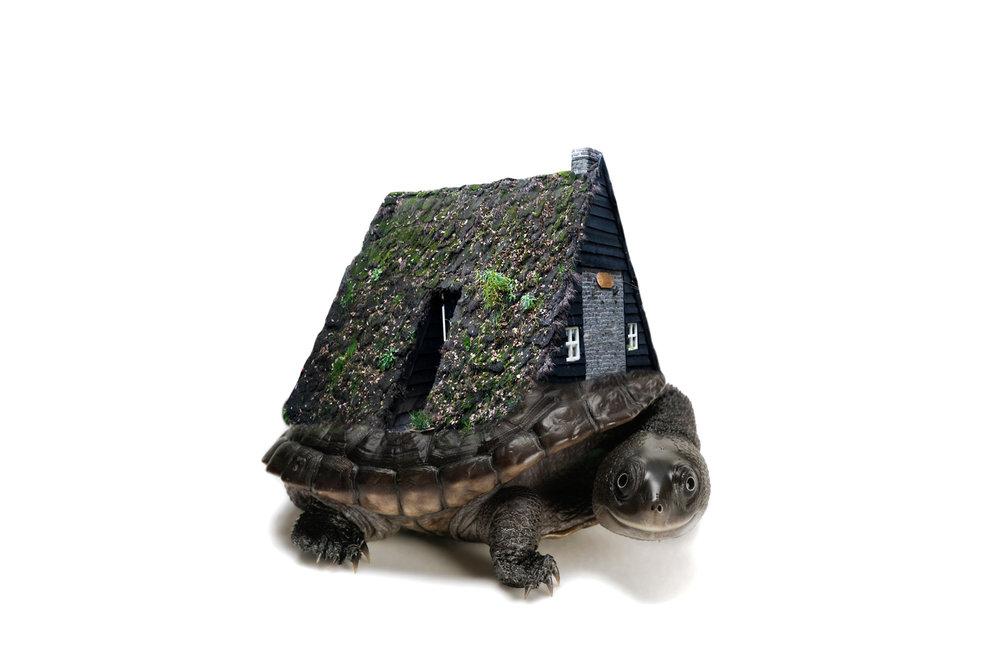 Cottage Turtle.2x3.2000px.jpg