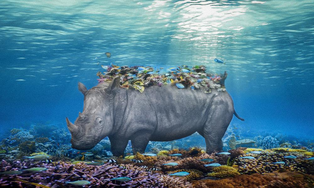 Rhino Reef.24x40.1200px.jpg