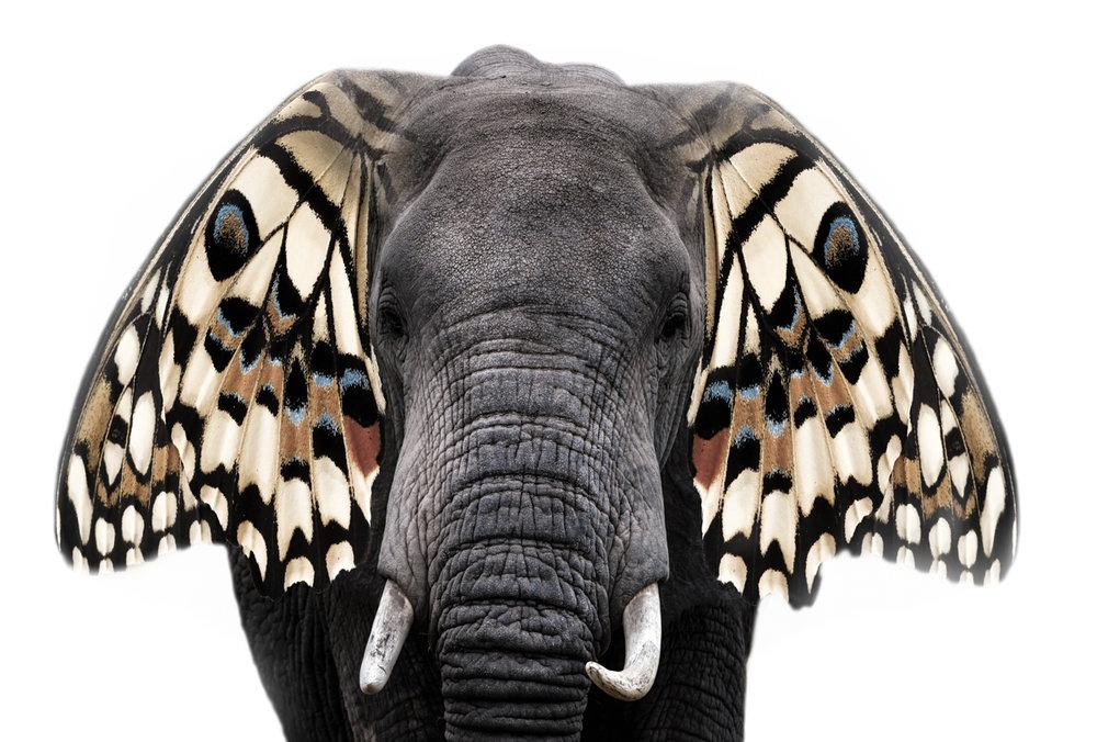 Butterfly Wings.12.5x18.5.1200px.jpg