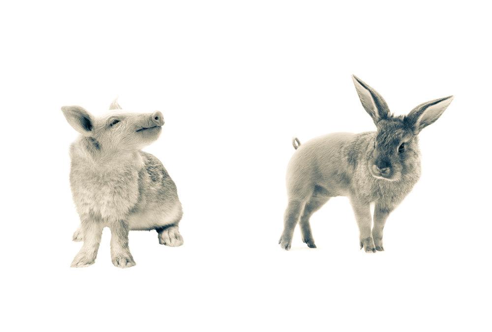 Pabbit & Bunnig.12.5x18.5.1200px.jpg