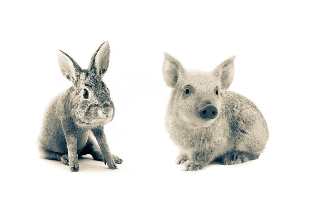 Pabbit & Bunnig #2.12.5x18.5.1200px.jpg