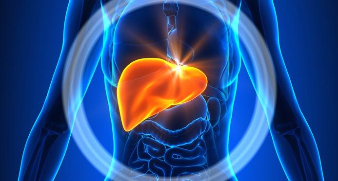 Liver-Female-Organs-Human-Anatomy.jpg