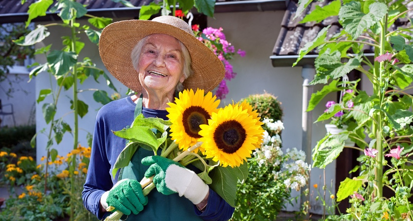 Happy-Senior-Woman-Holding-a-Bouquet-of-Sunflowers..jpg