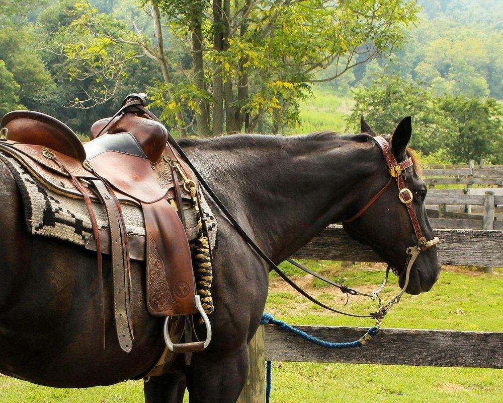 horse-176990_1920.jpg