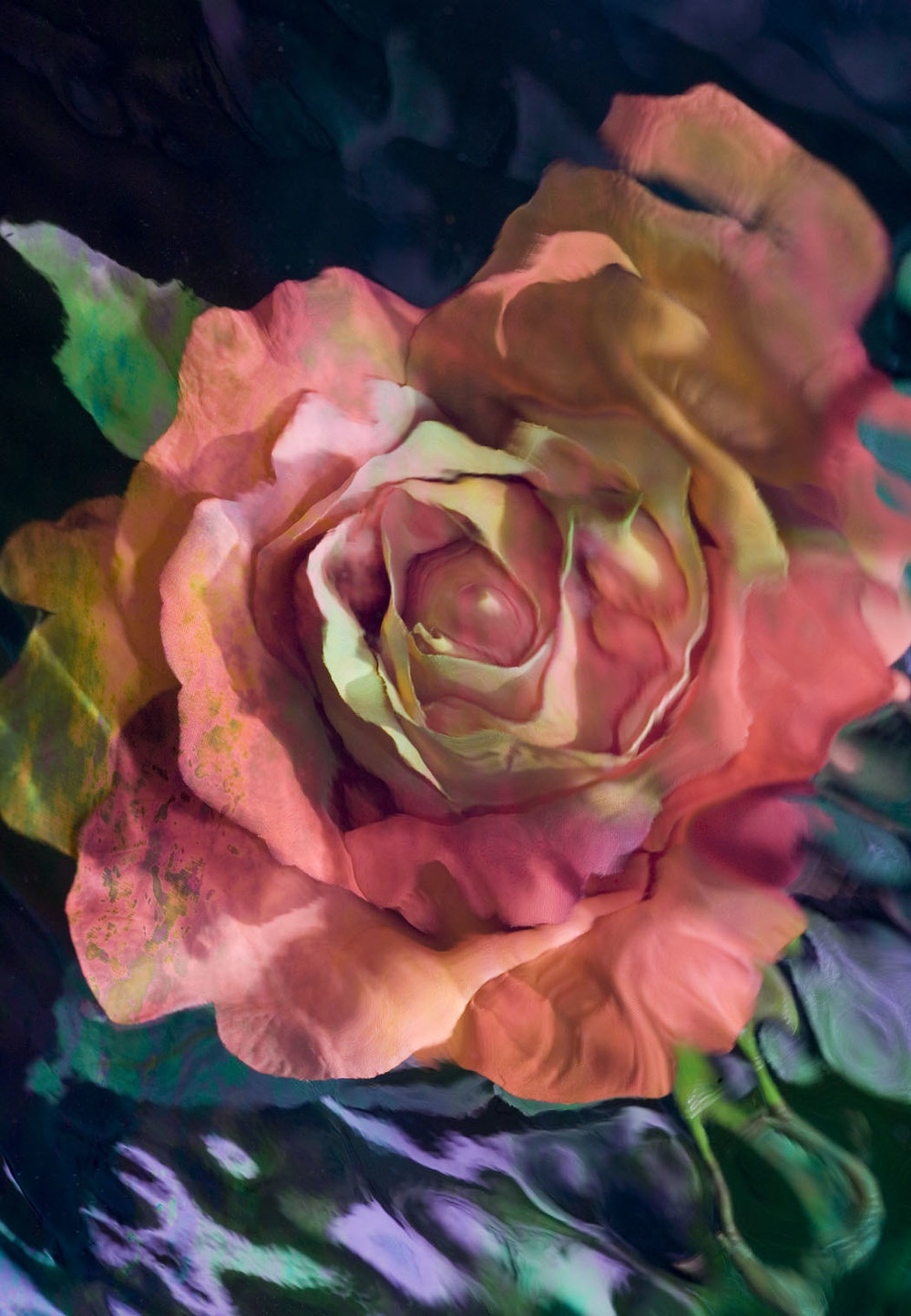 Rosey Reflection by Mary Louise Ravese small.jpg