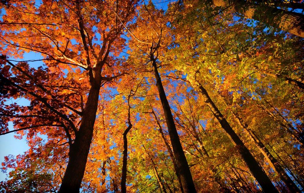Schlett_Autumn in Shenandoahs_photo_ 26 x 20.jpg