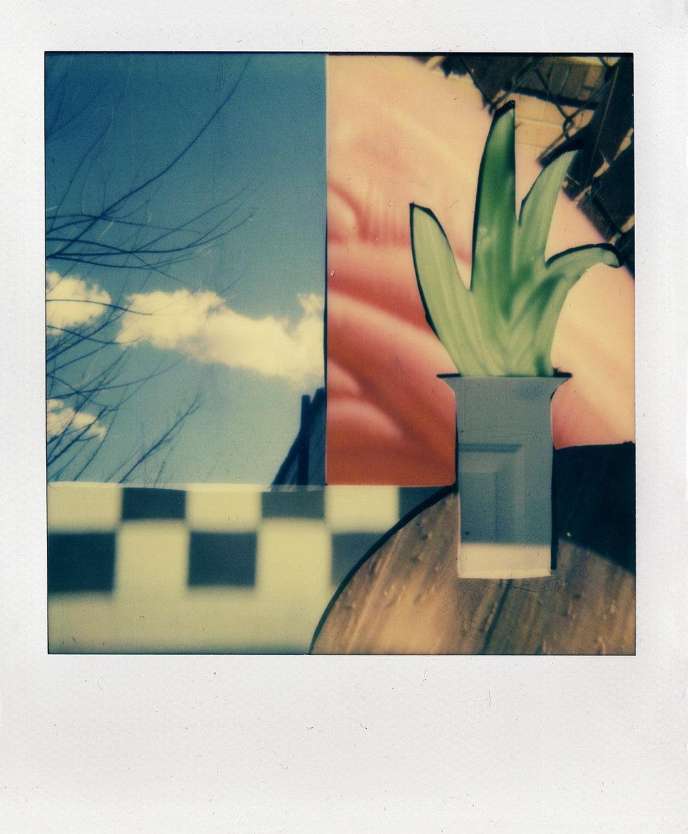Plant in Vase 1.jpg