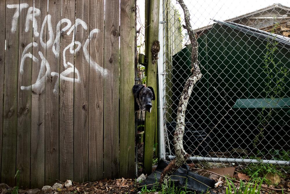 Dog in a Wall.jpg