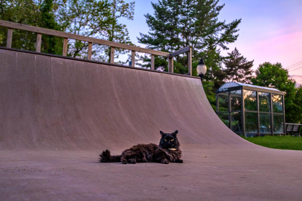 SkateCat.jpg