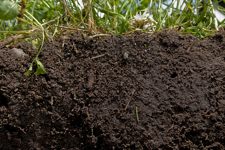 1. EARTH -   Our Fertile Ground    We begin with root medicine because we need an anchor. To be here. To receive energy.  To plug into the source energy of mother earth. When we're not rooted, energy dissipates. We need to build our practice on a solid foundation. As we develop a stable foundation, we can relax and let go. The more we relax and let go, the more grounded we become.