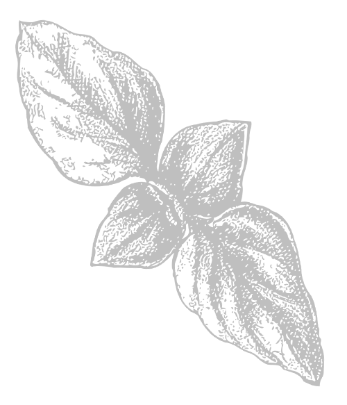 leaves.png