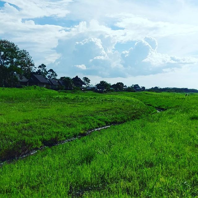 Missing those beautiful days in the jungle . . . . #arkana #beautfiul #junlge #amazon #sky #earth #clouds #nautre #photography #photooftheday