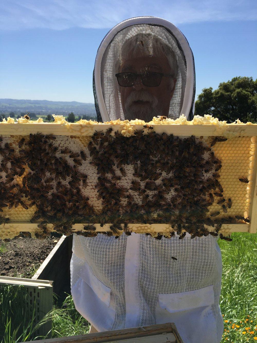 bee pictures 191.JPG