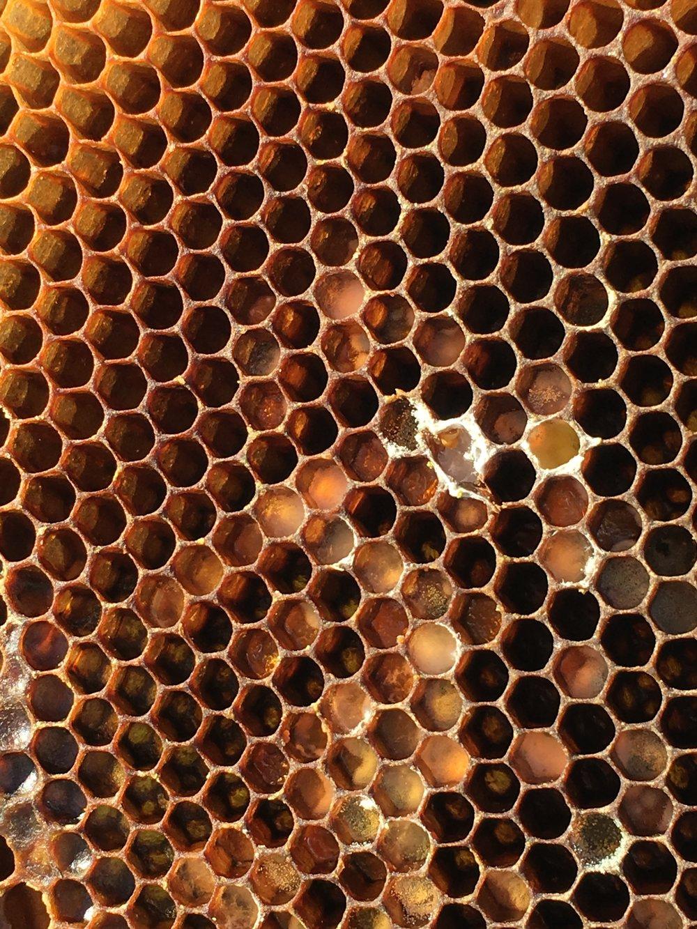 bee pictures 194.JPG