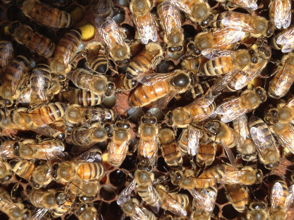 bees on frame 4.jpg