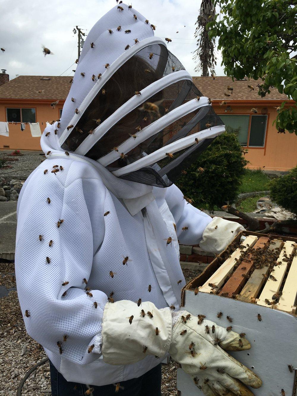 darlene bees.JPG