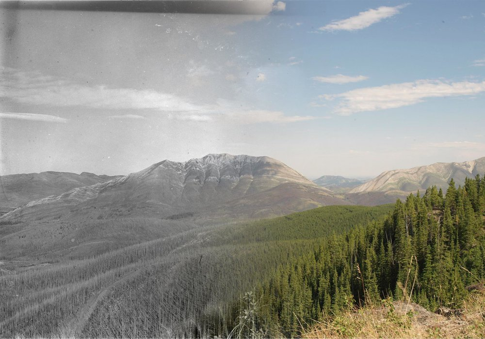 Willoughby Ridge in 1913 and 2006 (Mountain Legacy Project).