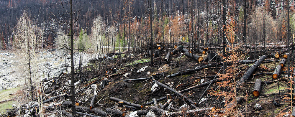 Wildfires leave patterns of not just burned trees, but also burned soils. How severely the soils burned can affect whether they lose or gain nutrients, or if they become impermeable to water, putting them at a high risk of erosion.
