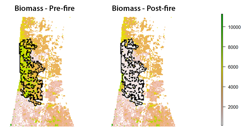 Preliminary results of a simulation in part of the Landscapes in Motion study area. You can see how total forest biomass decreased after a fire was simulated (black perimeter). The units provided are arbitrary values created for the demonstration.  Graphic by Ceres Barros.