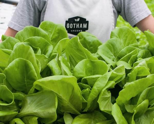 Gotham greens -