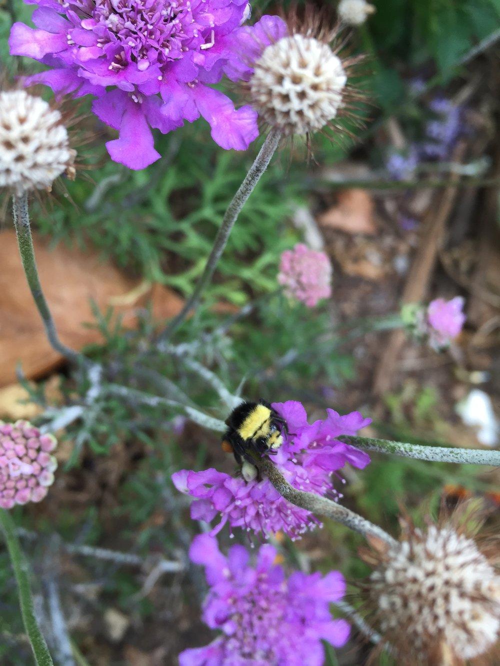 160616 - Garden2.jpg