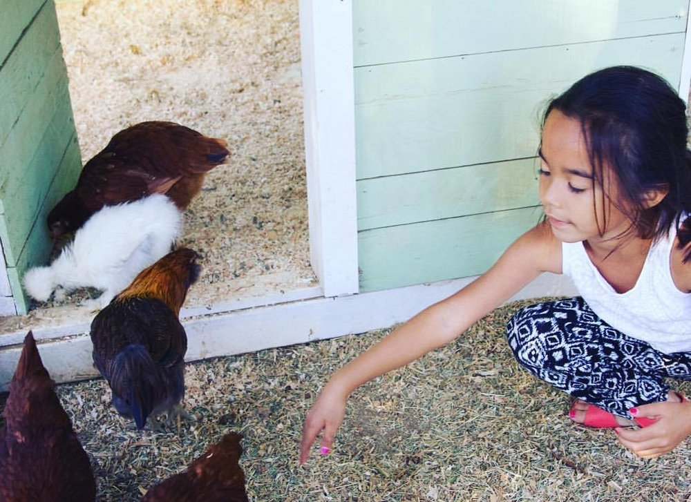 No one can resist these cuties! Check out @goodiefarm for organic goods located in Cherry Valley, CA (at Cherry Valley, California)