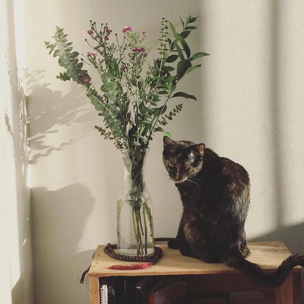 Sways in a Sunday Daze… #nunezphotography #lilswayze #tourtiesforlife #cats #kitty #flowers #sundayfunday