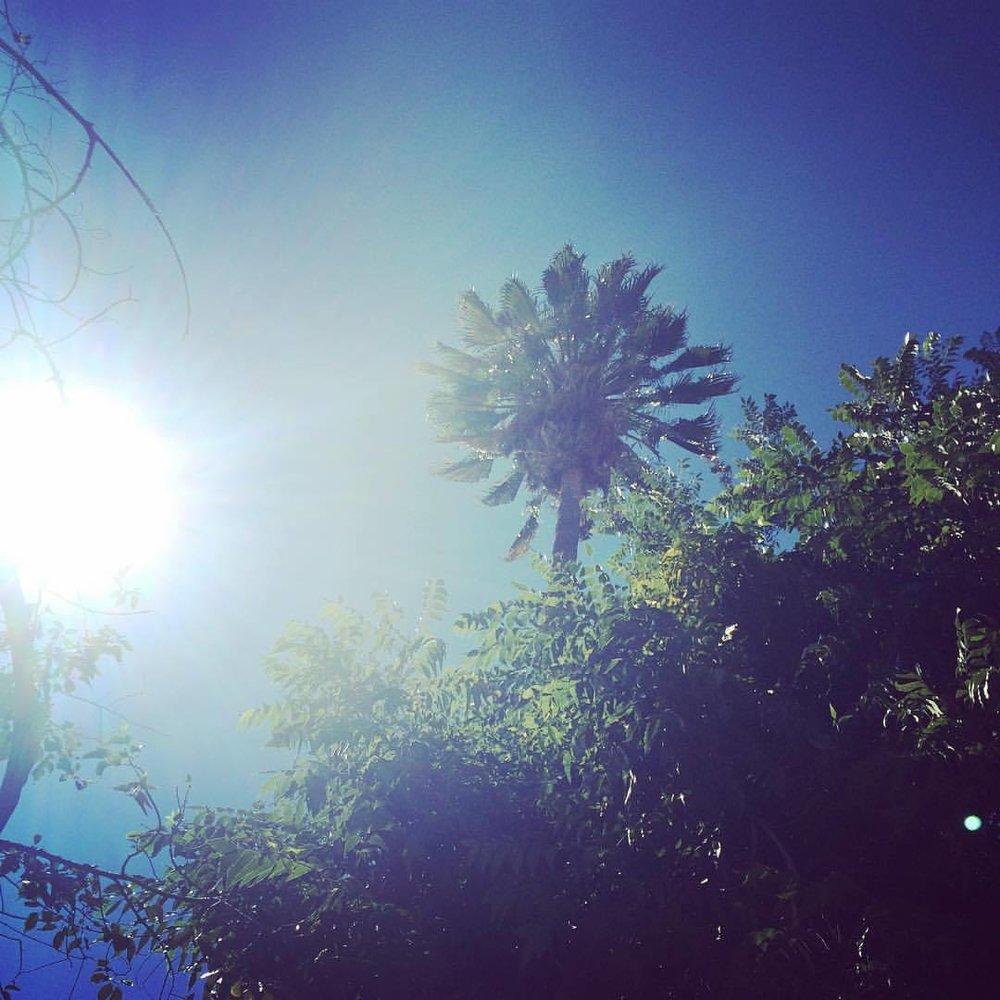 Cali Dreamin… #nunezphotography