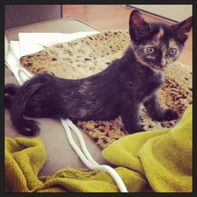 Love to do a #photoshoot with a naked women and this lil #creature before she gets big….  #modelwanted #nude #kitten