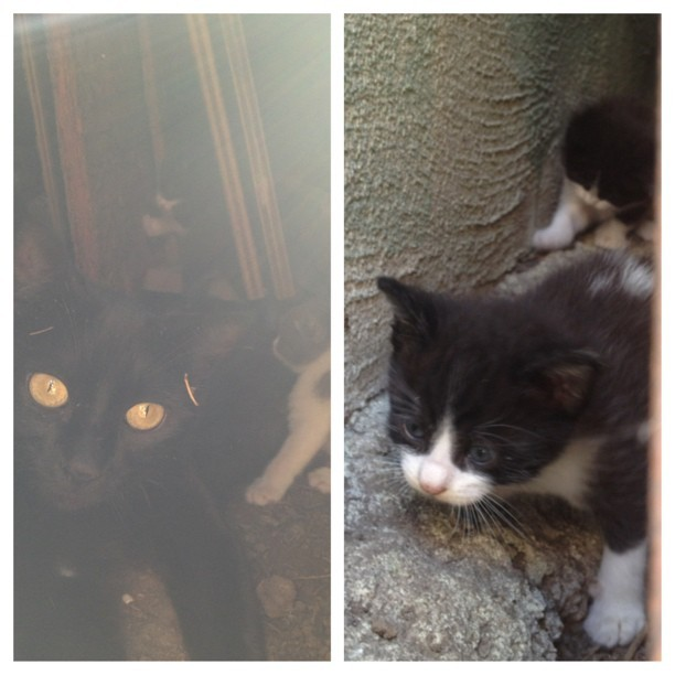My grandparents have a mama kitty and 4 baby gray and white kittens. We have not moved them yet as we don't have a proper place to contain. I would Love to adopt all out including mom (she's very sweet) any suggestions or inquiries please let me know! Share this too…. I want them to be looovvveeeddd