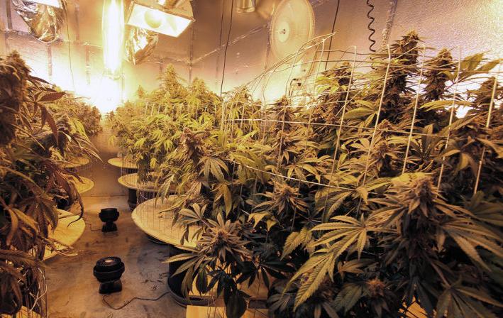 cannabis_indoor_growing_nielsen_fire_protection