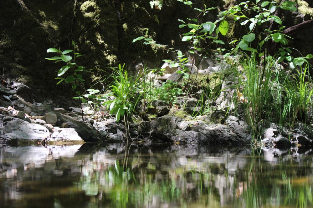 Sulphur Creek: Napa River tributary