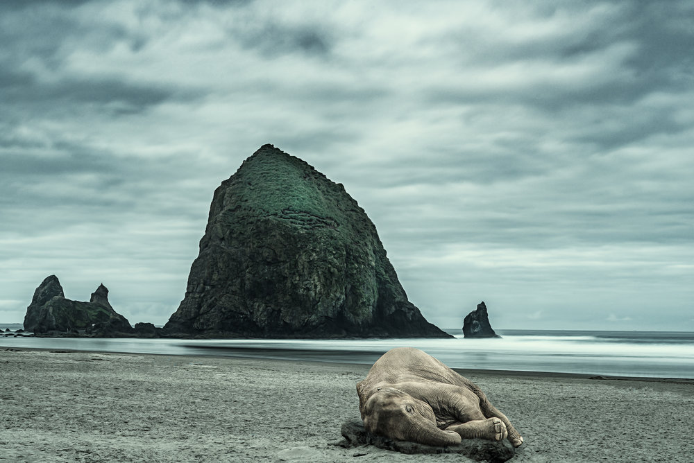 Elephant Laying On Beach-1.JPG