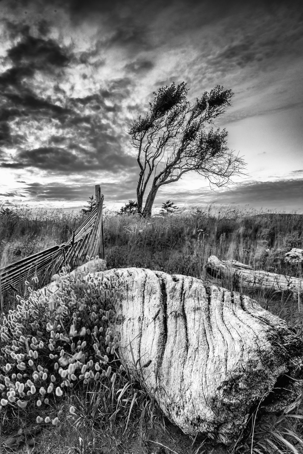 Driftwood and Tree BW.jpg
