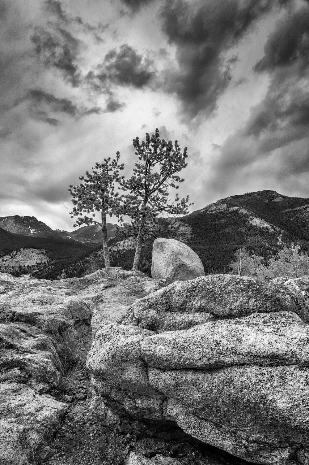 Rocky Foreground with Tree BW.jpg