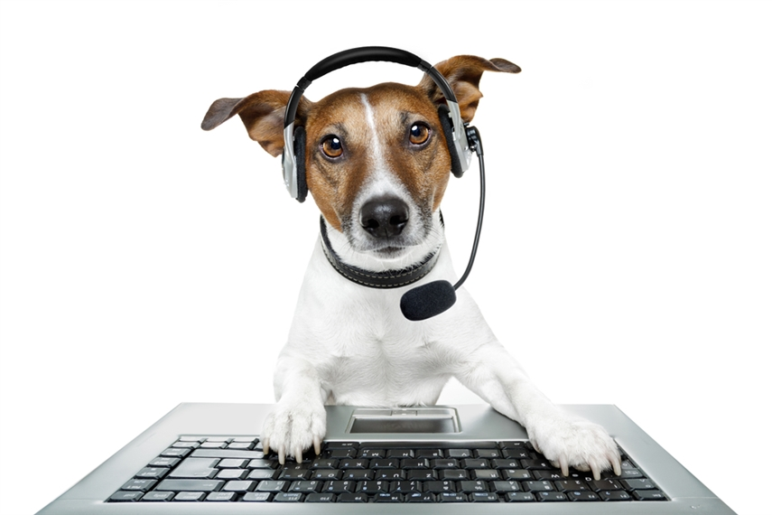 Page Not Found - Something may have gone wrong with the site, so a team of highly trained border-collies have been dispatched to look into the problem.Just in case, however, please check the address that you have entered for spelling mistakes!