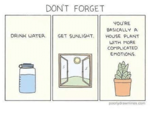 dont-forget-youre-basically-a-drink-waterget-sunlight-house-plant-30500420.png