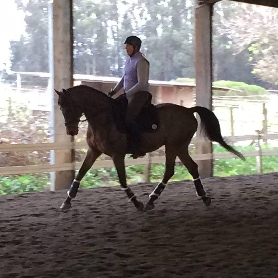"Anne Howard, trainer, competitor and ""r"" dressage judge, schools Grand Prix horse Rondo in the flapless system."