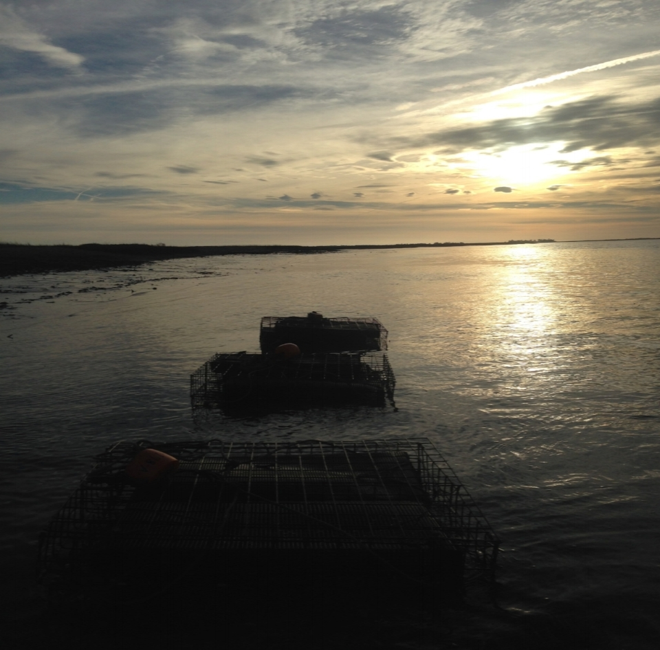 Bottom cages visible along the banks at low tide. Not only does this allow the oysters to brine and dry out invading barnacles, it also gives our oysters a chance to watch the sunset with all their single friends :)
