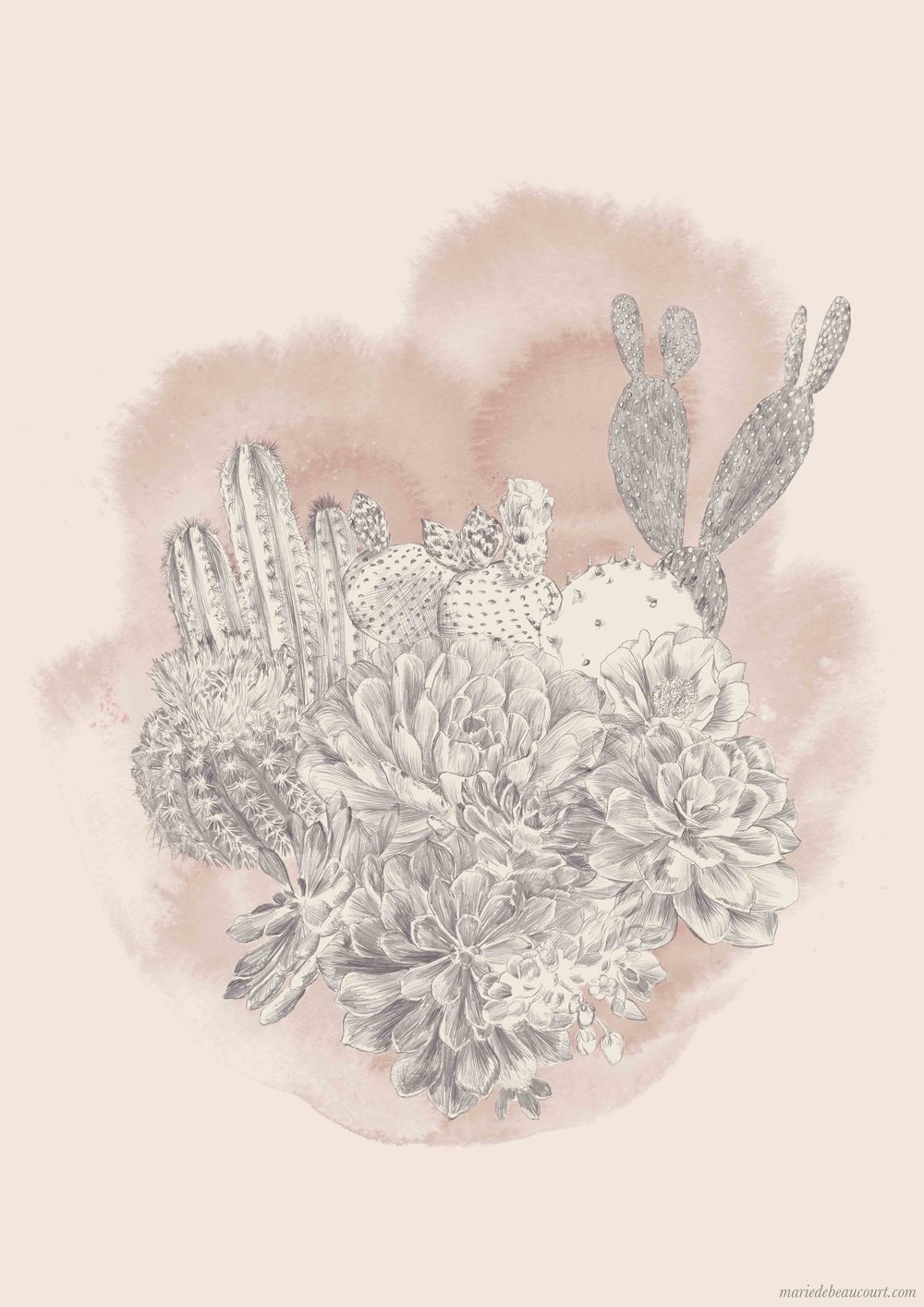 marie-de-beaucourt-illustration-botanic-cactus-2017-web.jpg