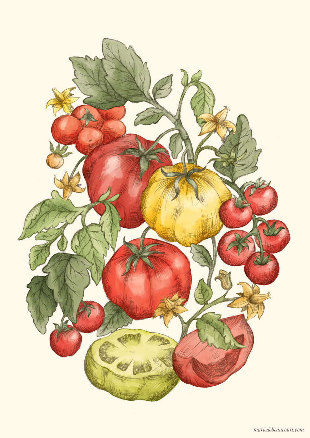 Marie-de-Beaucourt-illustration-editorial-Regain-ete2018-web-cover-tomatoes-vertical-wm.jpg