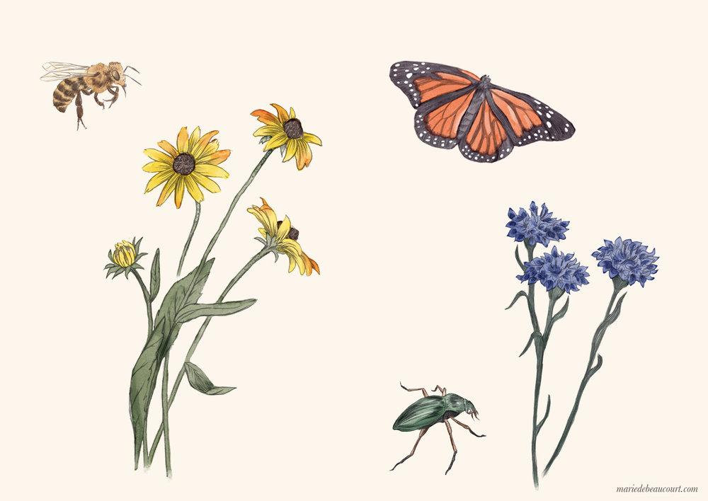 Marie-de-Beaucourt-illustration-editorial-Regain-ete2018-web-insects-flowers2-landscape-wm.jpg