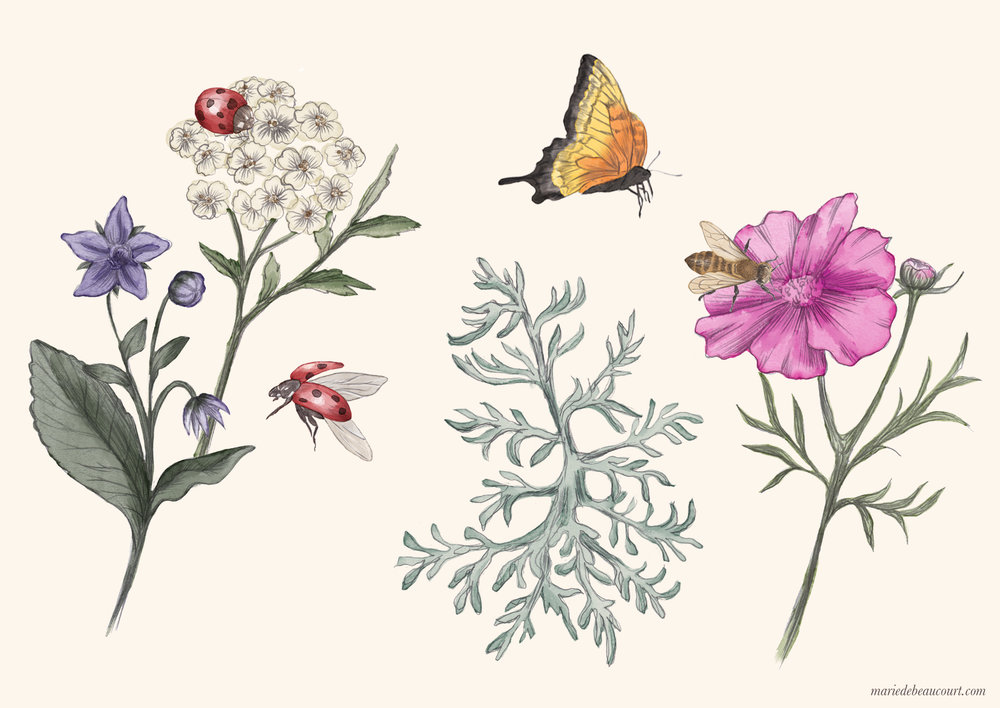 Marie-de-Beaucourt-illustration-editorial-Regain-ete2018-web-insects-flowers1-landscape-wm.jpg