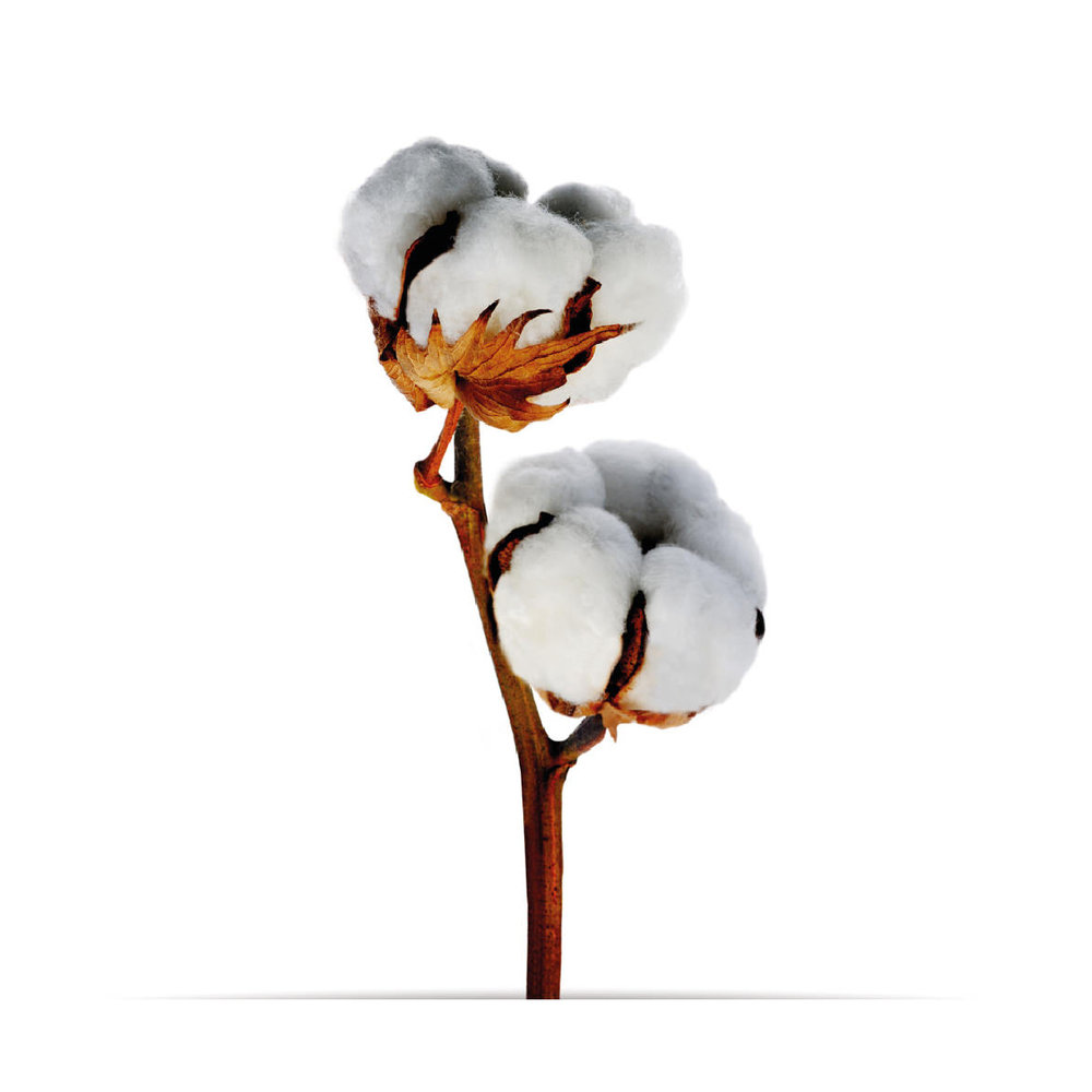 5_oNature_Flower_Cotton-Flower.jpg