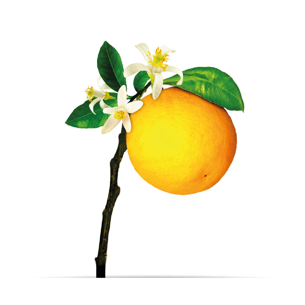 8_oNature_Flower_Citrus-Grove.jpg
