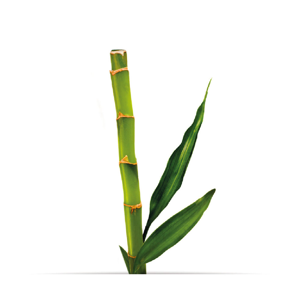 10_oNature_Flower_Bamboo.jpg