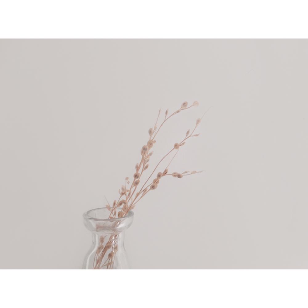 planta-seca.jpg