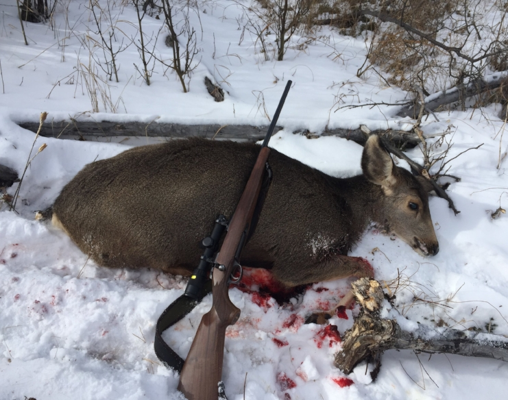 A successful deer hunt in the Colorado mountains. With only 1.5 hours from home the deer had to wait in the cooler until rigor mortis had passed.